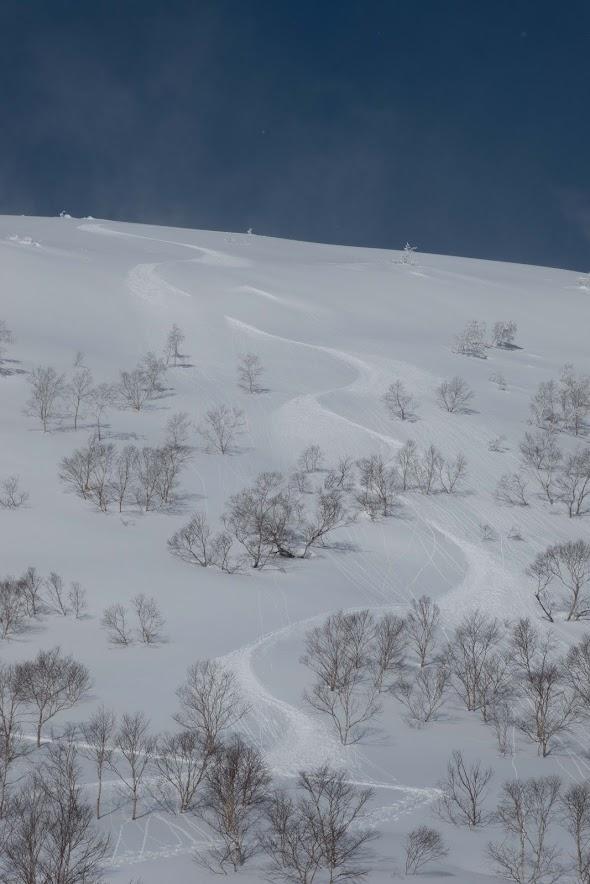 Typical terrain in Niseko