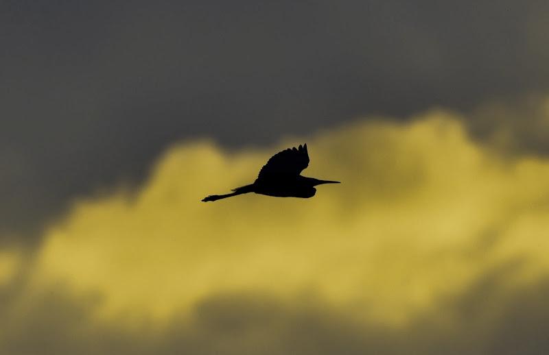 Silenzioso profilo al tramonto di Highlander