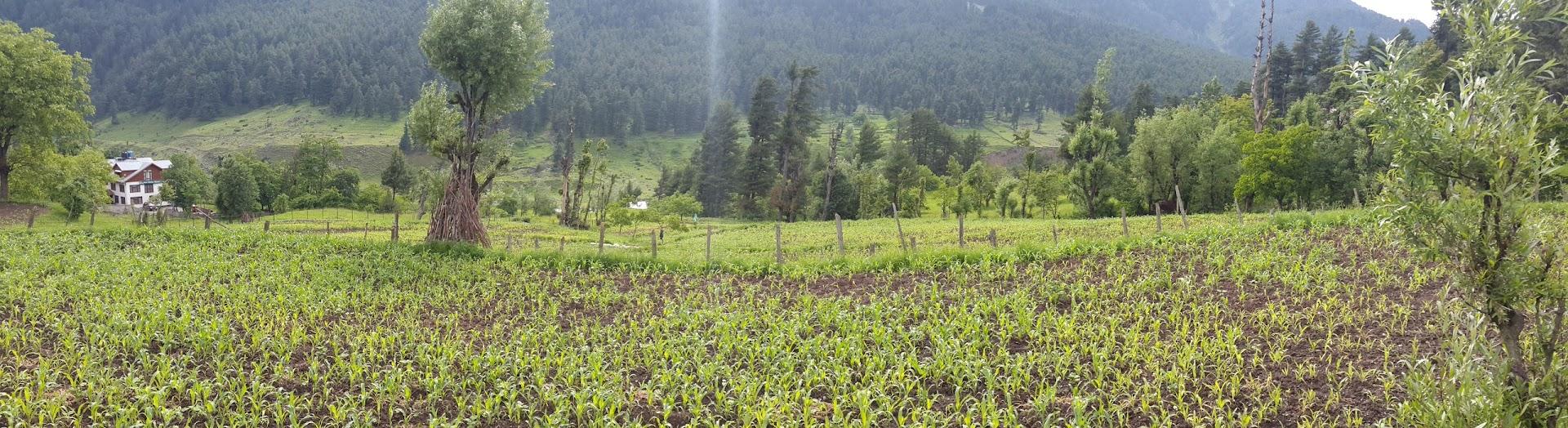 Panaroma shot of a farm