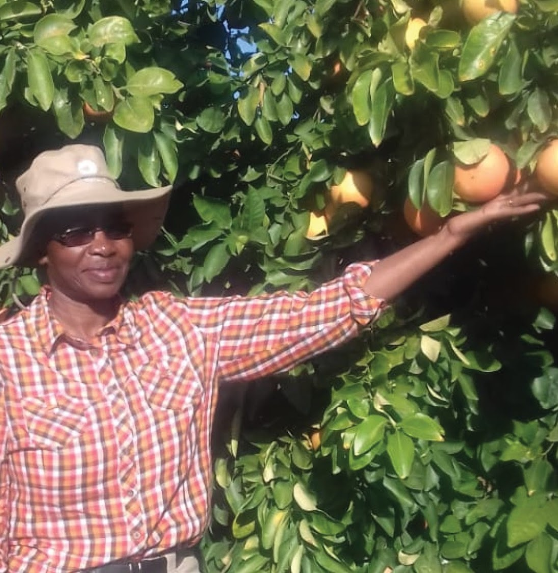 Smangele Gumede exports grapefruit to Japan, Europe and the Middle East.