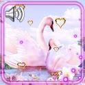 Swans Valentine Live Wallpaper icon