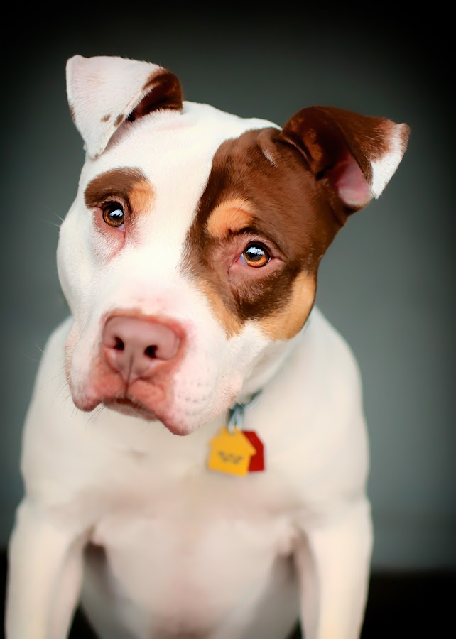 dog by Stacey Gammon - Animals - Dogs Portraits ( pet, dog )