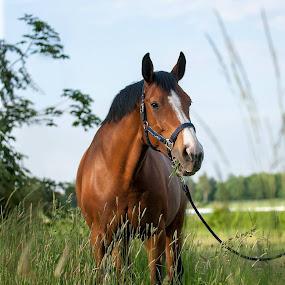 RipostaHA by Aleksander Cierpisz - Animals Horses