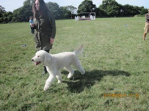 Photo: Kerry and Alan Labradoodle