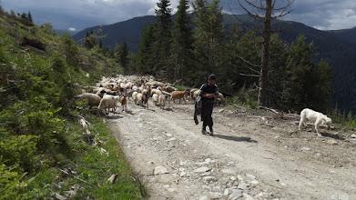 """Photo: Az """"ellenség"""" /100 kutya+80 birka/"""