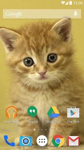 子猫の壁紙