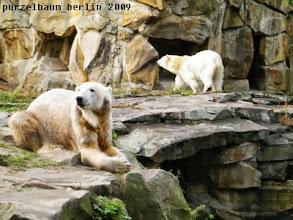 Photo: Knut schaut in die Runde und Gianna geht spazieren ;-)