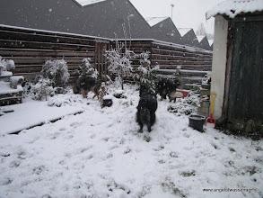 Photo: Weer even snuffelen en sneeuw happen