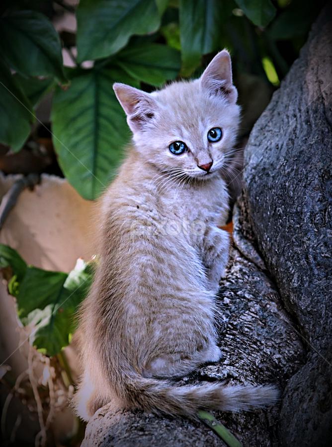 Don't follow me! by Pieter J de Villiers - Animals - Cats Kittens