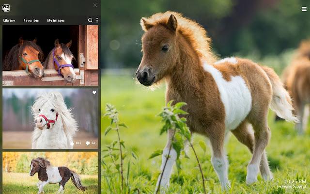 Cute Pony Hd Wallpaper New Tab Theme