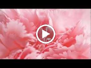 Video: A. Vivaldi  Dorilla in Tempe (RV 709-D) - II Aria [Admeto]  Se ostinata a me resisti   Ph. Cantor -