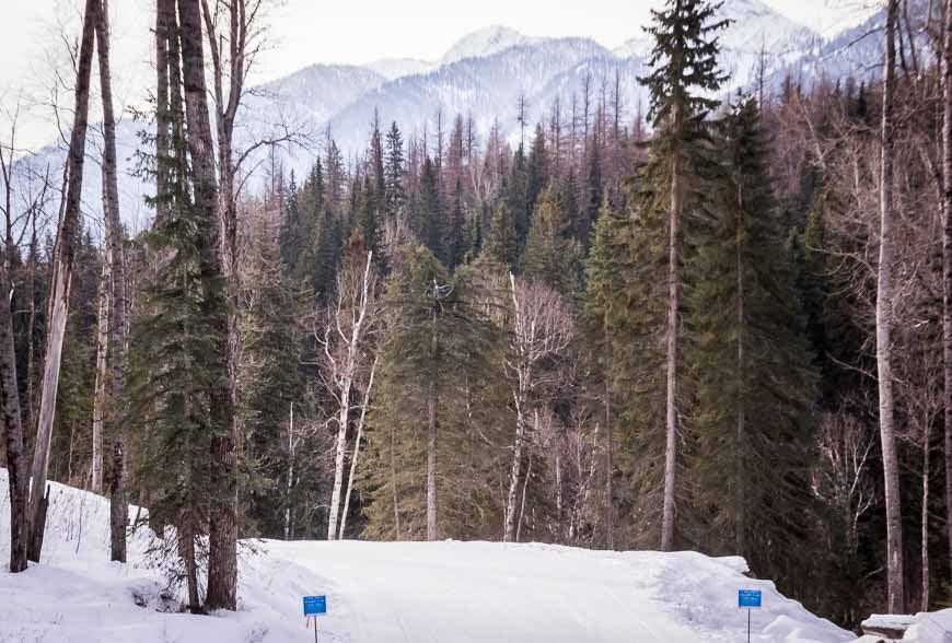 A gorgeous back-drop for cross-country skiing in Fernie