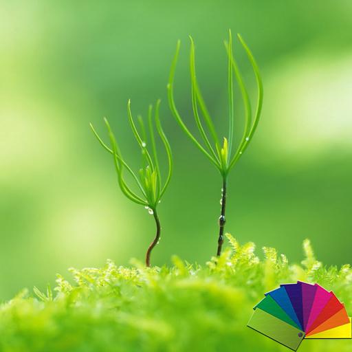 Blurry Plant Theme For Xperia