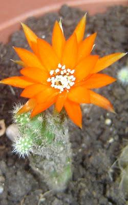 Fiore arancione di giovyy86