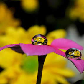 Dew by Andri Priyadi - Nature Up Close Flowers - 2011-2013 (  )