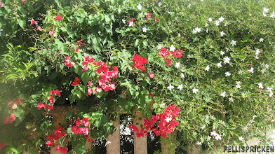 Photo: Blommande staket