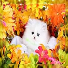 Kittens ,,, Download on Windows