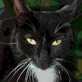 Black cat by Marissa Enslin - Digital Art Animals (  )