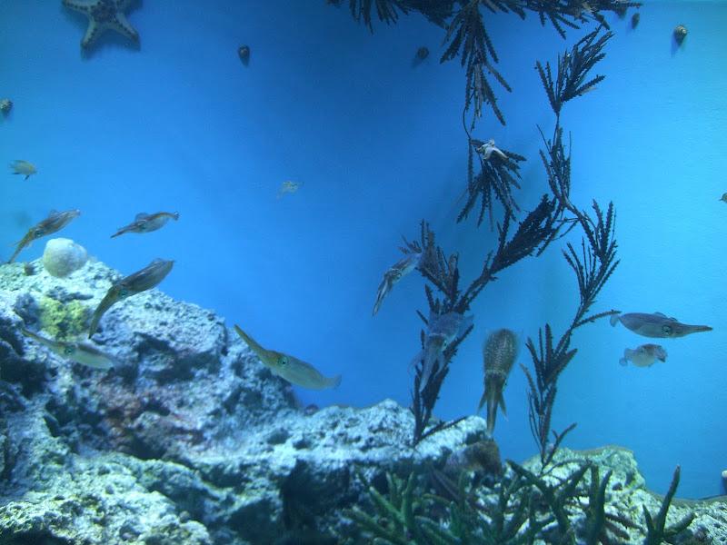 Photo: 2011 Sunshine Aquarium, Tokyo