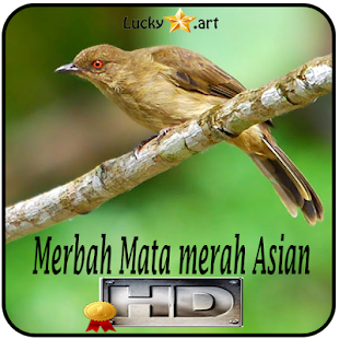 Merbah Mata merah Asian Top - náhled