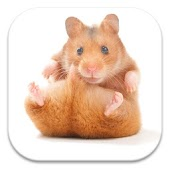 Cute Hamster Live Wallpapers