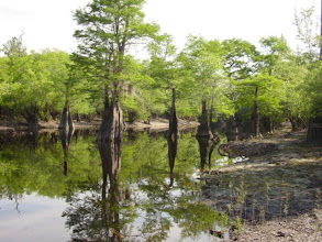 """Photo: """"Oxbow"""" is a term used to desribe the lakes formed when the course of the river has changed over the decades - leaving behind a lake where the river once flowed. These oxbow lakes provide for excellent fishing and hunting areas. Being on or around an oxbow lake you have the feeling of stepping back in time."""
