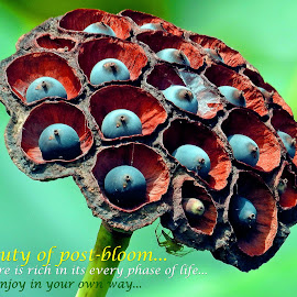 Beauty of post-bloom... by Asif Bora - Typography Quotes & Sentences