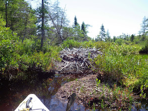 Photo: Beaver Lodge