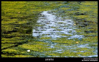Photo: Verde vida en los canales.