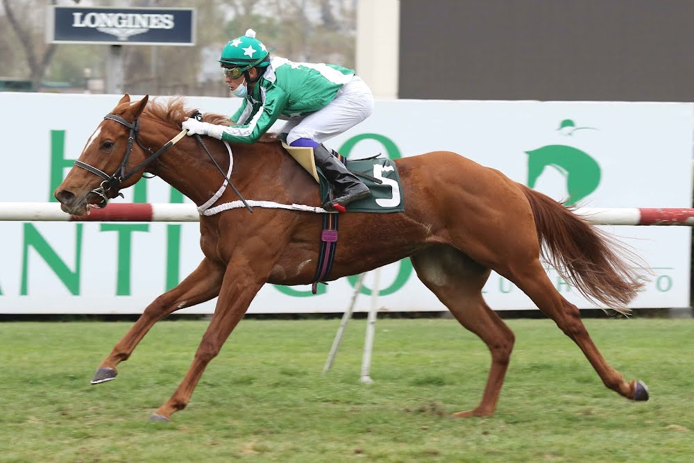 Mother's Love (Daddy Long Legs) se queda con la victoria en Condicional (1000m-Pasto-CHS).