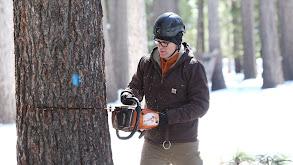 Up a Tree thumbnail