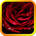 Blood Rose Live Wallpaper icon