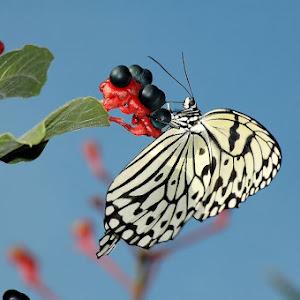 Butterfly_D70-_DSC_0116_12-15-2005.jpg