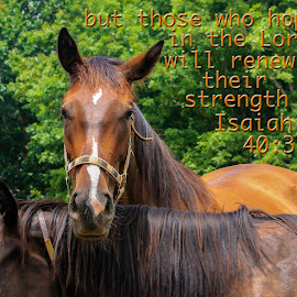 Strength by Keith-Lisa Bell Bell - Typography Quotes & Sentences ( green, scripture, horse, brown, typography )