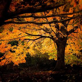 Illuminated by Madhujith Venkatakrishna - Nature Up Close Trees & Bushes (  )