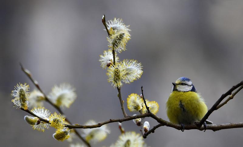 Primavera è nell'aria.... di gigidueelle