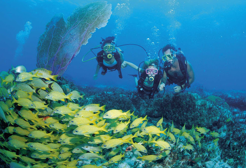 Go on an unforgettable scuba diving experience while visiting Nassau/Paradise Island.