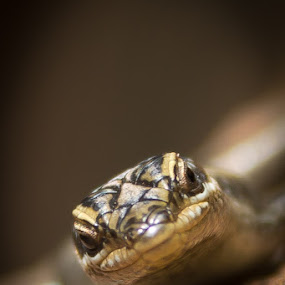 by Paul Carter - Animals Reptiles
