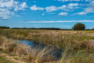 Photo: Vista; Lake Woodruff NWR