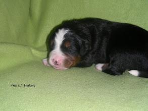 Photo: pes č.1     FIALOVÝ