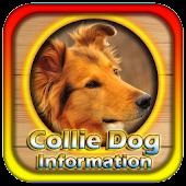 Collie Dog Information