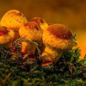 W Åsen svamp 39 DSC04637.jpg