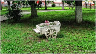 Photo: Parcul Tineretului - ornament - 2013.06.01