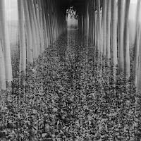 Tunnel di pioppi di