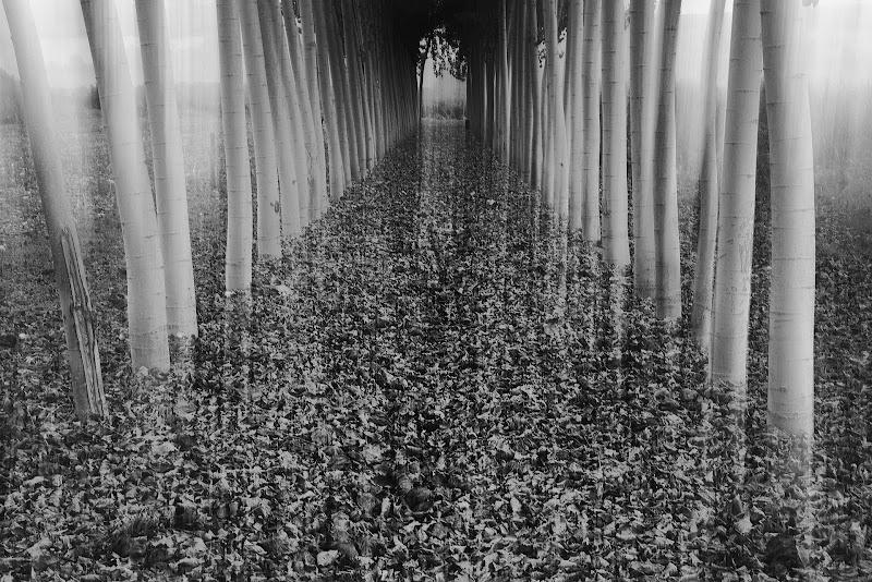 Tunnel di pioppi di borik57