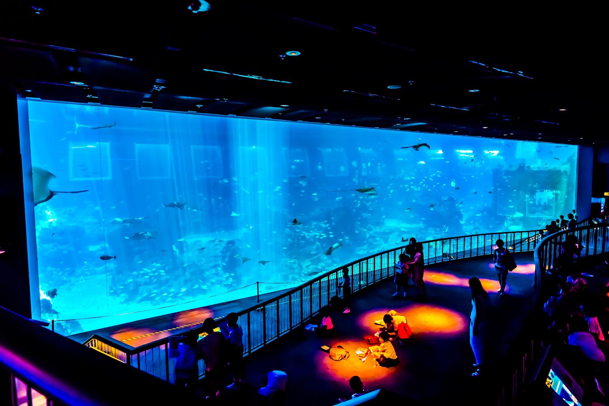 Singapore Sentosa S.E.A. Aquarium Open Ocean