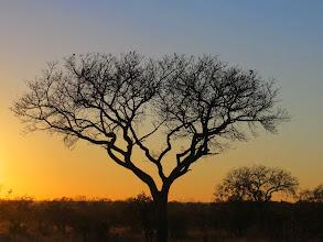 Photo: Manyeleti Reserve, South Africa, sunset