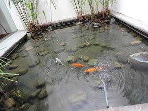 Photo: A se zlatejma rybkama v ceně.