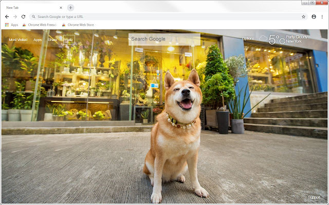 Shiba Inu HD Wallpapers New Tab Themes