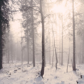 soft by Michael Bolli - Landscapes Forests ( fog, snow, switzerland, forest, sun )